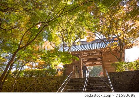 가을 시코쿠 영지 뿌리 香寺 71593098
