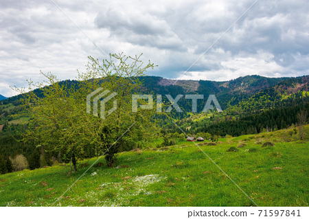 mountain rural landscape in spring. forest and orchard on the steep hills. scenery of abandoned Kuzsbej village. two houses in the distance. cloudy sky 71597841