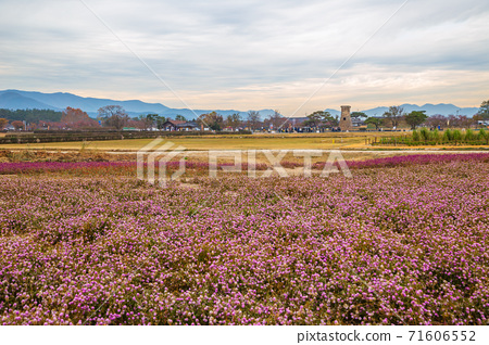 Cheomseongdae observatory with flower field in Gyeongju, Korea 71606552