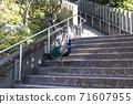 Peacock walking along the approach to Amabiki Kannon 71607955