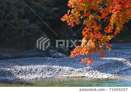 오쿠 타마 _ 계곡의 풍경 _ 가을 71609207