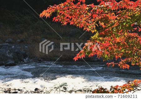 오쿠 타마 _ 계곡의 풍경 _ 가을 71609211