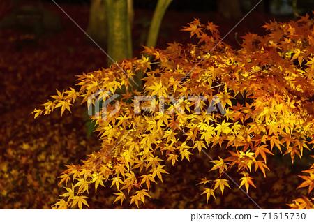 가을 禅林寺 (에이 칸)의 단풍 라이트 업 교토시 사 쿄구 71615730