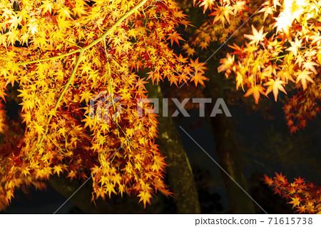 가을 禅林寺 (에이 칸)의 단풍 라이트 업 교토시 사 쿄구 71615738