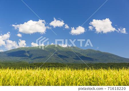 가을의 조카 이산 수확 직전의 벼 야마가타 현 유자 마치 71618220