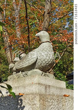 Oyaba Hikawa Shrine ・ Pheasant, Saitama City, Saitama Prefecture 71618485