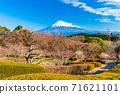 (시즈오카 현) 이와 모토 산 공원의 매화와 후지산 71621101