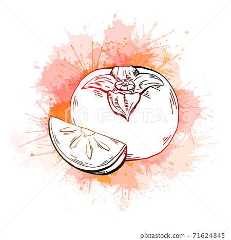 Contour sketch of a whole persimmon and a piece with juicy orange watercolor splash on a white background. Healthy natural food. Vector outline illustration 71624845