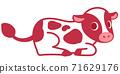 荷斯坦的小牛 71629176