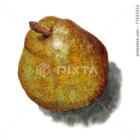 Analog watercolor pear 71642852