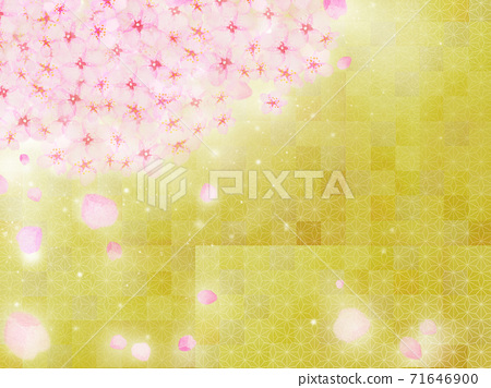 Japanese painting style New Year's New Year background illustration in which cherry blossoms in full bloom are blooming with petals scattered against the background of gold leaf 71646900