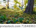 가을 풍경 단풍 나무와 낙엽 71646963