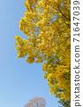 단풍과 푸른 하늘 71647039