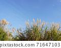 가을 하늘과 식물 71647103