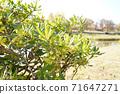 강변의 식물 71647271