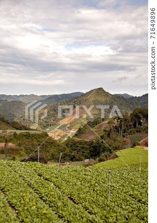베트남, 달랏 고원의 계단식 밭에서 채소 재배 71649896