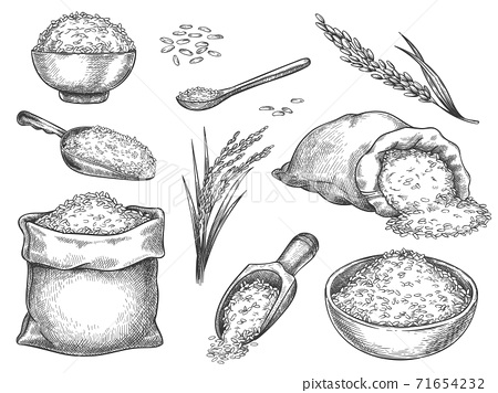 Sketch rice grains. Vintage seeds pile and farm ears. Whole basmati grain in bag, scoop and spoon. Rice porridge bowl. Hand drawn vector set 71654232