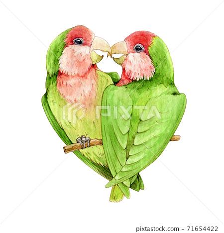 Lovebird parrot watercolor illustration. 71654422