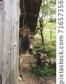 Donkey sticking out of the barn. Home farm, cute animal 71657356