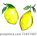 Two lemons with leaves isolated, hand drawn. Kitchen design. 71657407