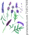 Violet lavender flowers set, sketch drawn with colord pencils 71657409