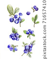 set of the blueberries, pencil drawn illustration. 71657410