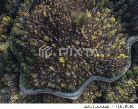 森林 71658060