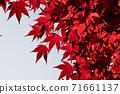 Burning autumn leaves 71661137