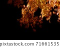 Autumn leaves in the light 71661535