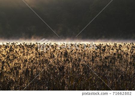 연밭 풍경 71662802