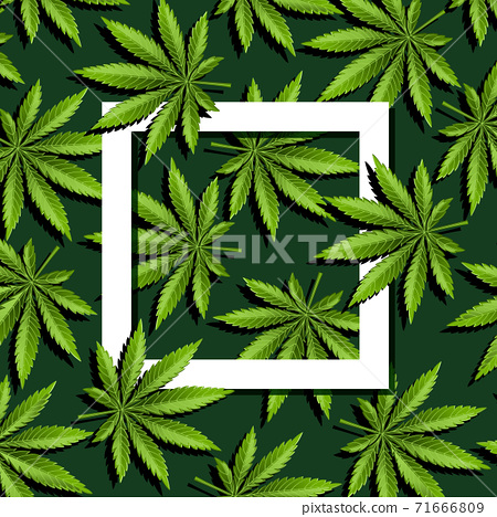 Paper frame with marijuana leaves, cannabis leaves 71666809