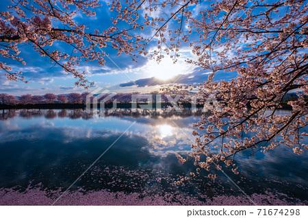 탕 · 열쇠 유적의 벚꽃 71674298