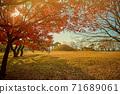 韓國的秋天風景。慶州市陽光,樹木和樹葉 71689061