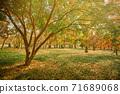 韓國的秋天風景。慶州市陽光,樹木和樹葉 71689068