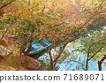 韓國的秋天風景。慶州市陽光,樹木和樹葉 71689071
