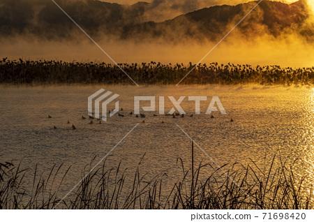 물안개피는 강가의 아침 71698420