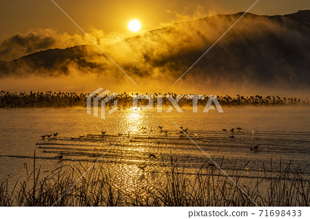 The misty morning by the river 71698433