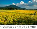 Mt. Tsukuba and sunflower field 71717981