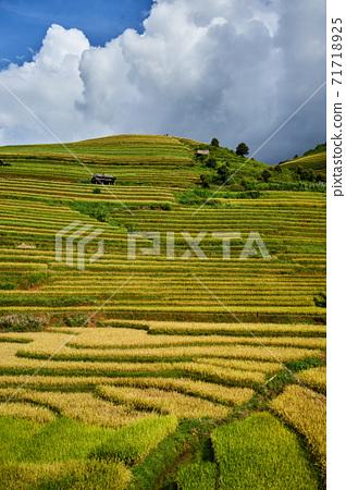 越南木倉柴收穫季節的金色水稻梯田 71718925