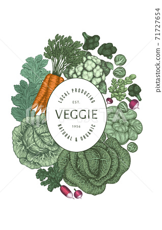 Hand drawn vintage color vegetables design. Organic fresh food vector banner template. Retro vegetable background. Traditional botanical illustrations. 71727654