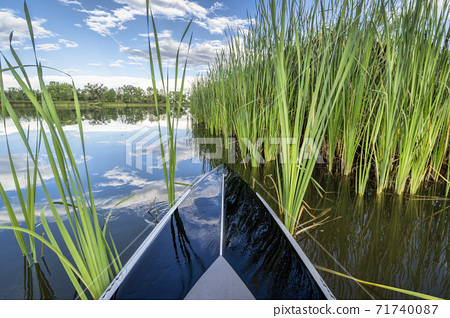 stand up paddleboard  in green reeds 71740087