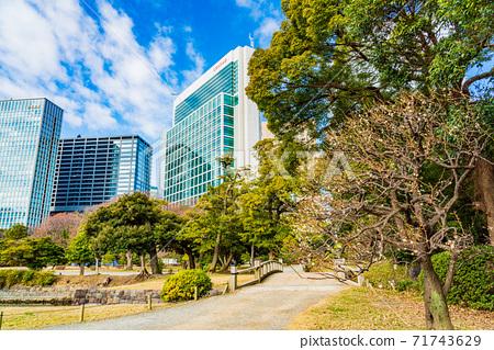 (도쿄도) 매화가 개화 한 하마 리큐 은사 정원 71743629