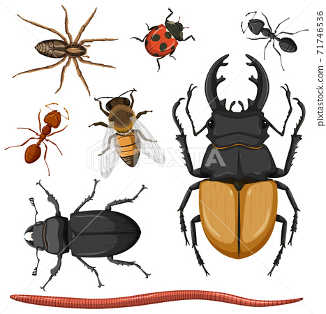 Set of different insects on white background 71746536