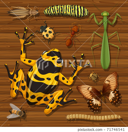 Set of different insects on wooden wallpaper background 71746541
