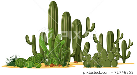 Different shapes of cactus in a group 71746555