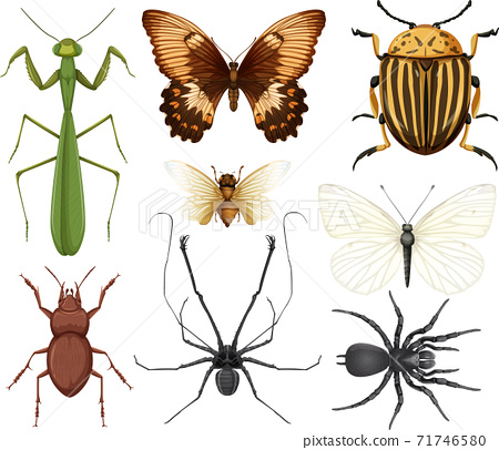 Different insects collection isolated on white background 71746580
