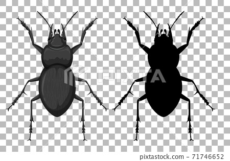Beetle on transparent background 71746652