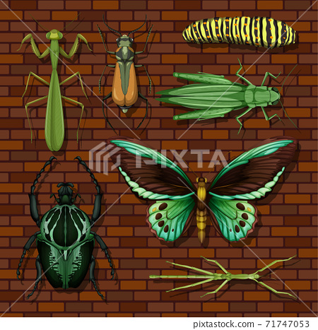 Set of different insects on wooden wallpaper background 71747053
