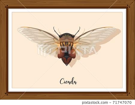 Cicada on wooden frame 71747070