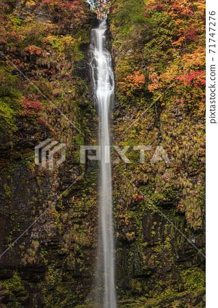 [岐阜縣郡上市白鳥町]秋葉A。日本有100種瀑布。 71747276